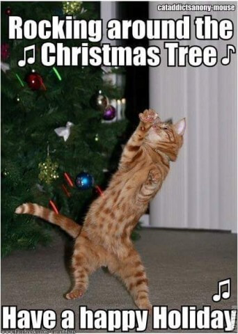 03_Cat_Christmas_Rocking