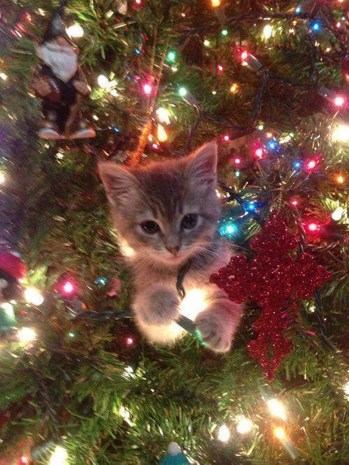14_Cat_Christmas_Tree_Kitten