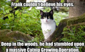 catnip_operation