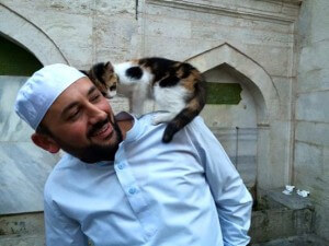 cats in Turkish mosque
