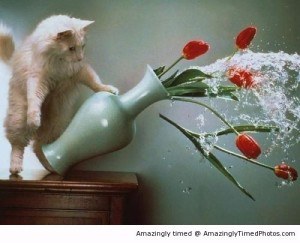 Cat-dumps-the-water-out-of-the-vase-resizecrop--