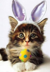 easter bunny cat 2