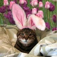 easter bunny cat 3
