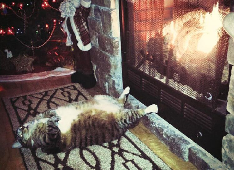 Cat_Tails_Fireplace_Chestnuts