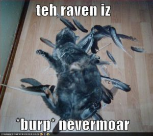 cat-eats-raven-bird