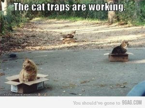 cat traps working